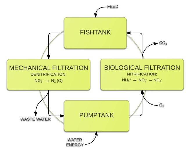 Processes within a recirculating aquaculture system -640